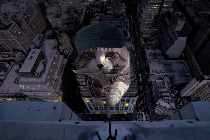 gato edificio