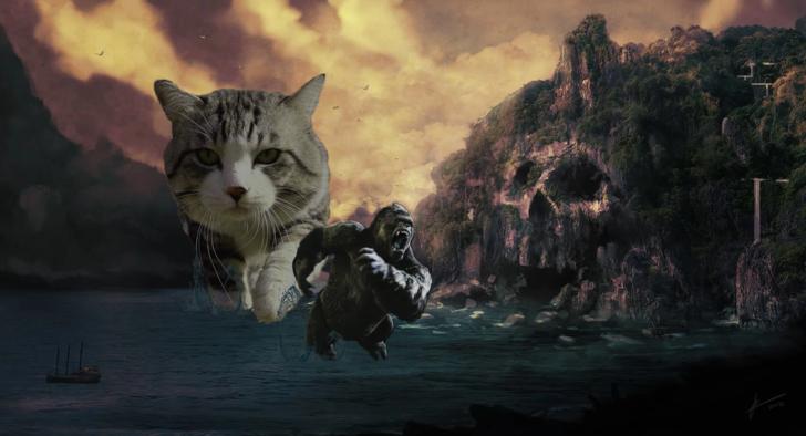 gato kong