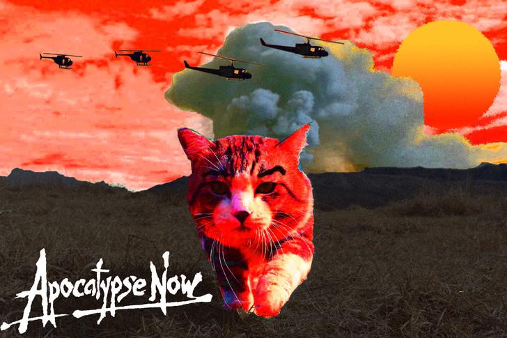 gato apocalipsis