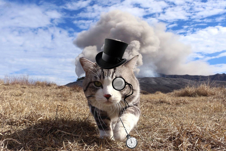 gato sombrero