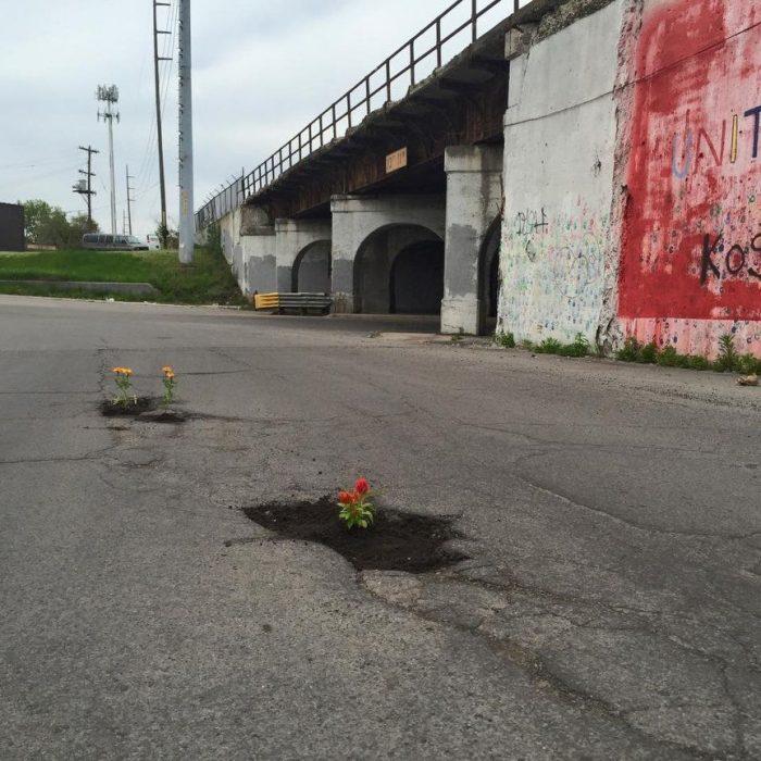 plantas en calles