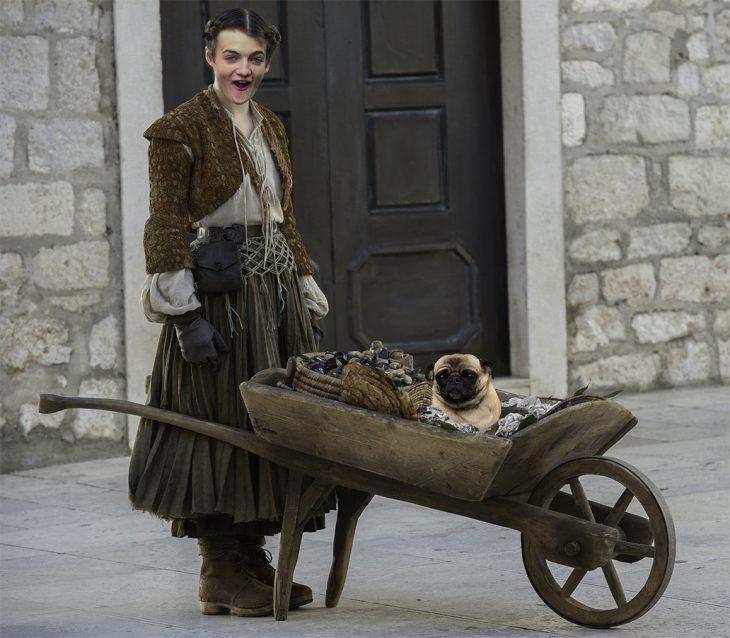 Jack Gleeson Pug meme King Joffrey 11
