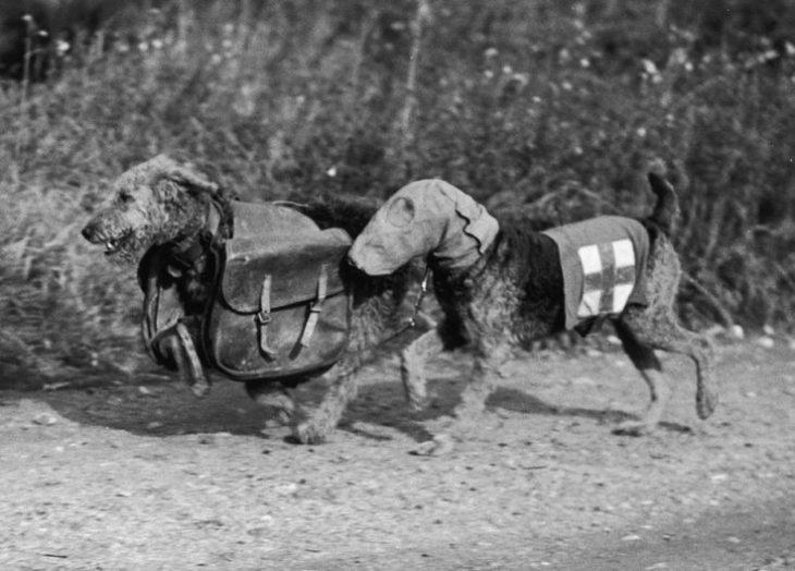 animales durante la guerra inglaterra
