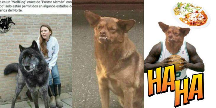 el perro mas famoso de mexico
