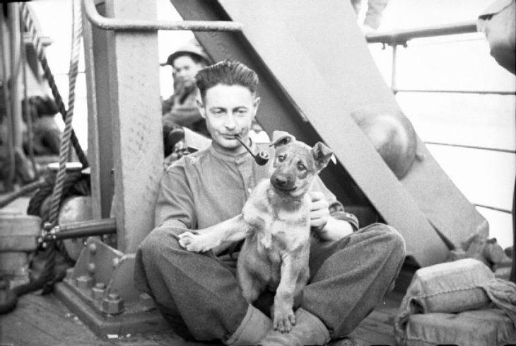 perros durante la guerra inglaterra