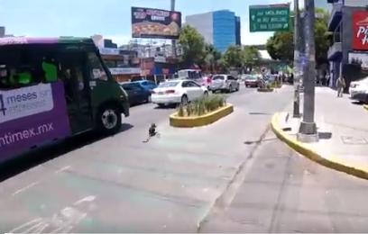 perro autobus