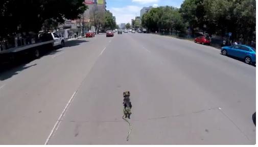 perrito corriendo