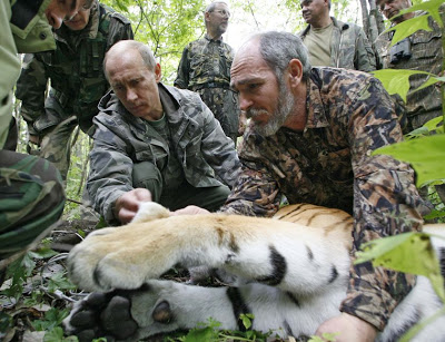 putin tigre