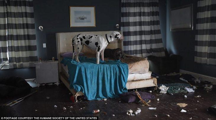 perros casa