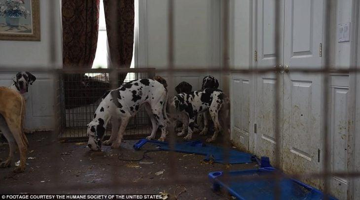 perros suciedad