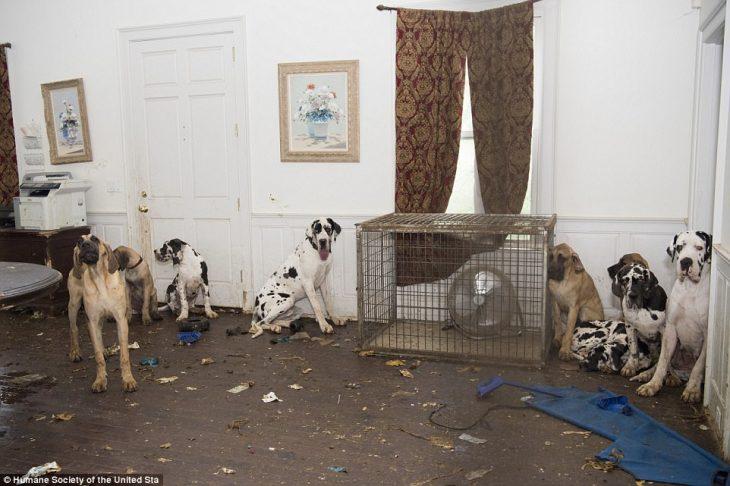 perros mansion