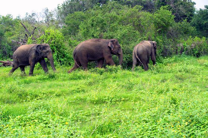 Elefantes en el bosque