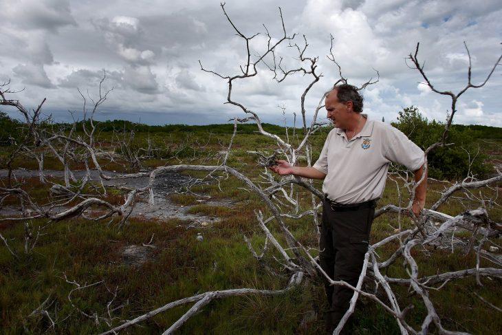 Investigador de árboles