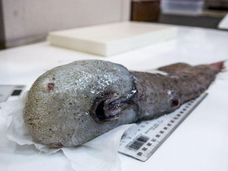 pez sin rostro