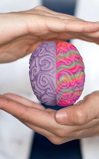 funciones-cerebro