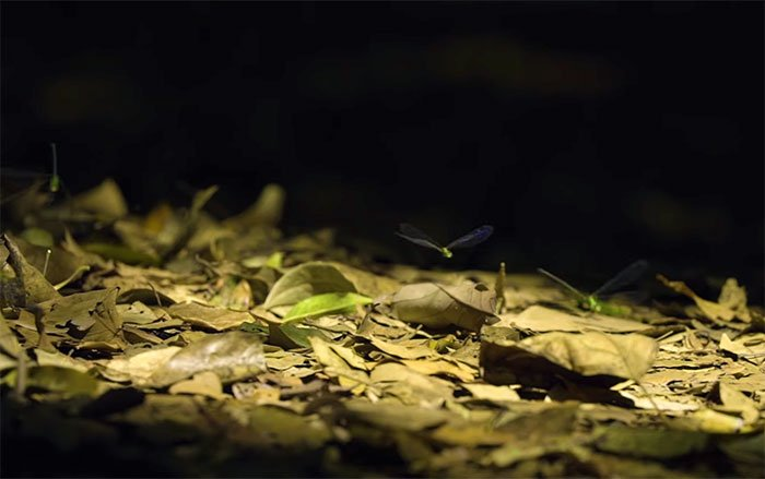 Insectos en el bosque