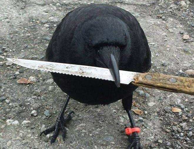 canuck cuchillo