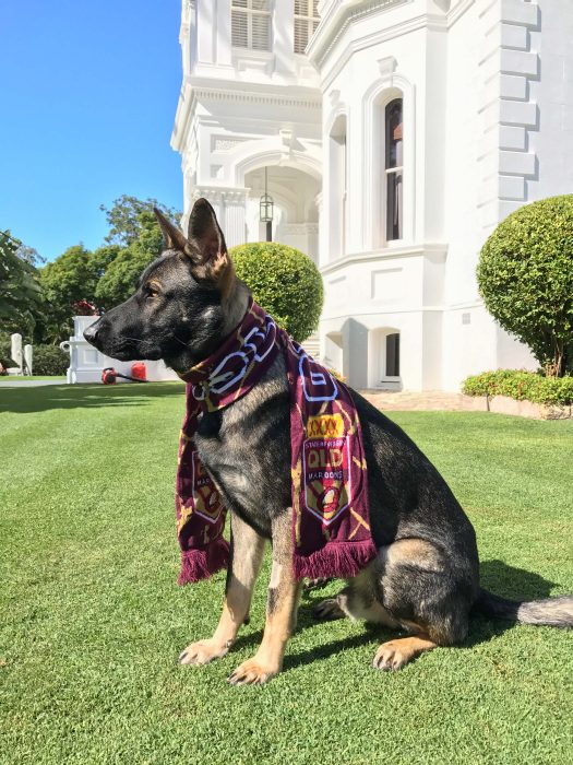 Gavel perro