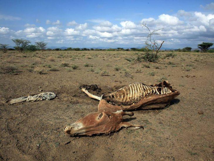 Escenas del cambio climático