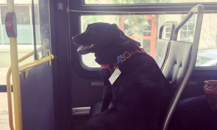 Perro viaja solo en el autobús