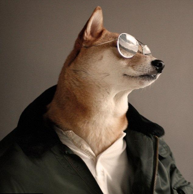 Perro Shiba en Batalla de Photoshop