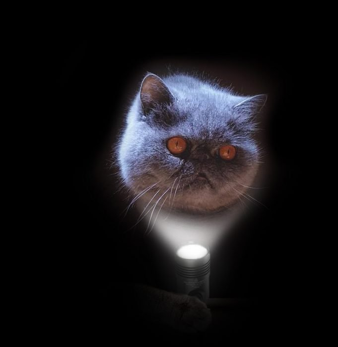 evil cat guerra de photoshop 4