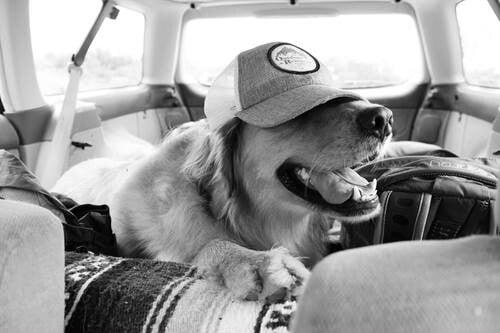 Woodstock tom hardy perro