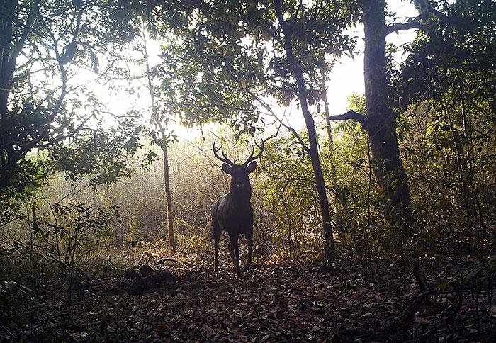 Animales en santuario en el bosque