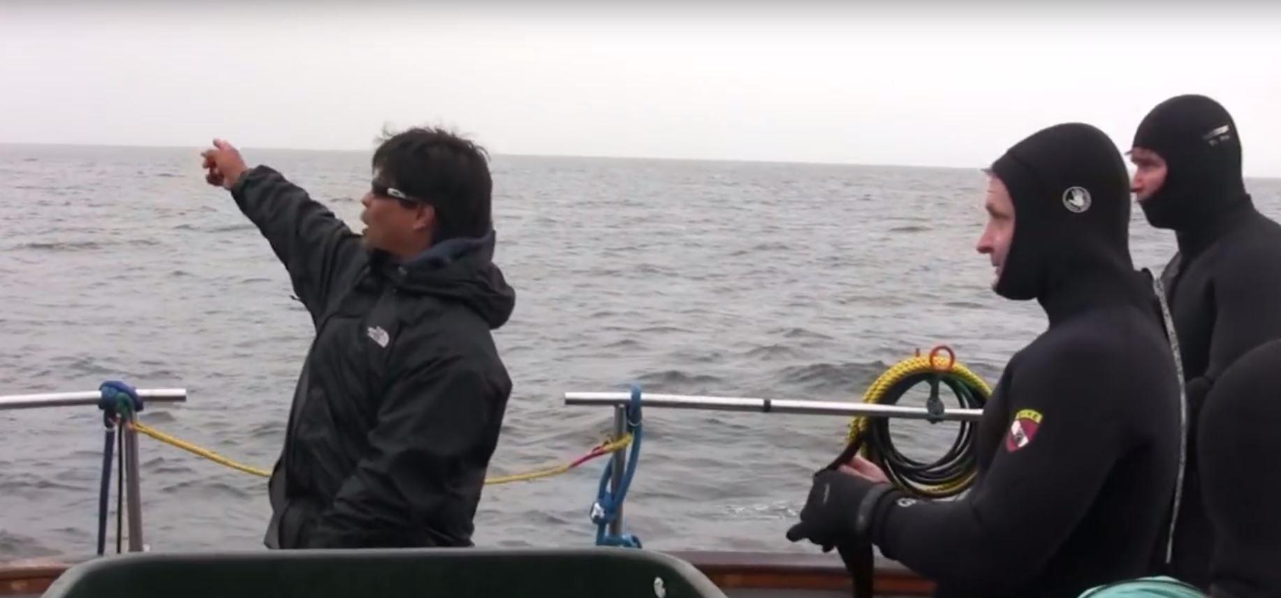 Buzo salva a ballena