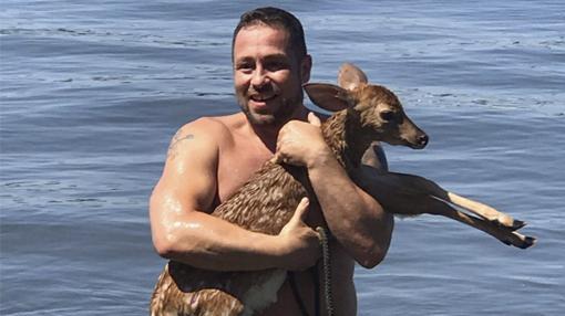 perro salva cría de ciervo
