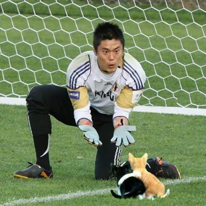 Photoshop gatos futbol