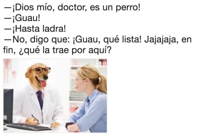 doctor perro