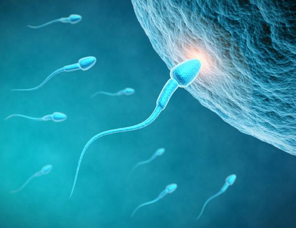 espermas