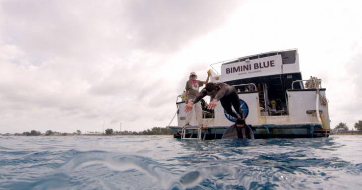 Phelps contra tiburón