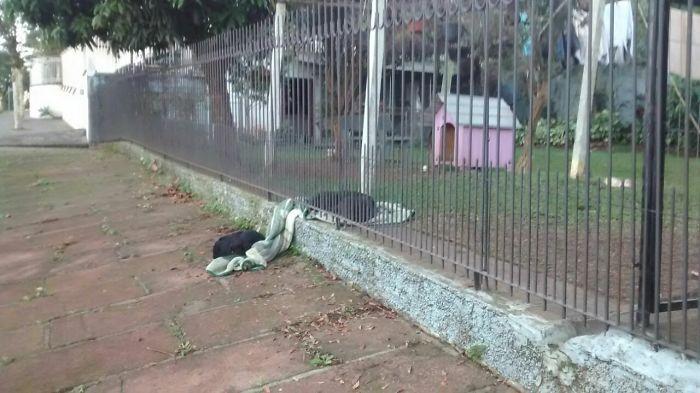 perrito comparte su manta