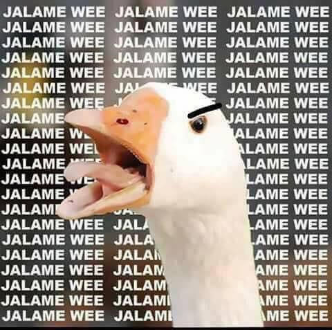 ganso jálame we meme