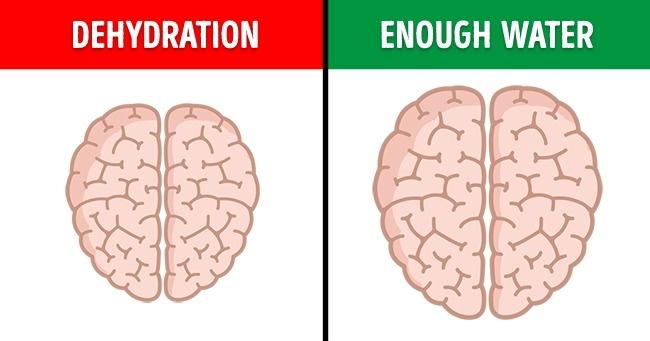 cerebro deshidratado