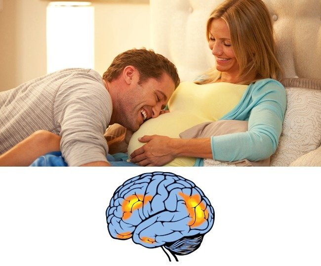 el embarazo y el cerebro