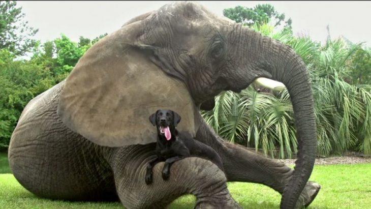 Elefante y perro son mejores amigos