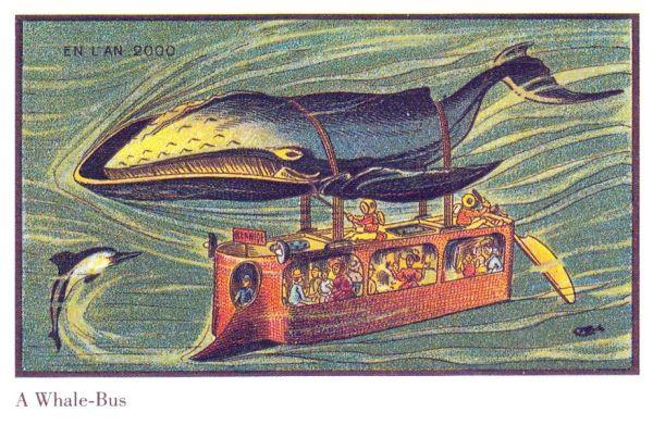 ballena transporte