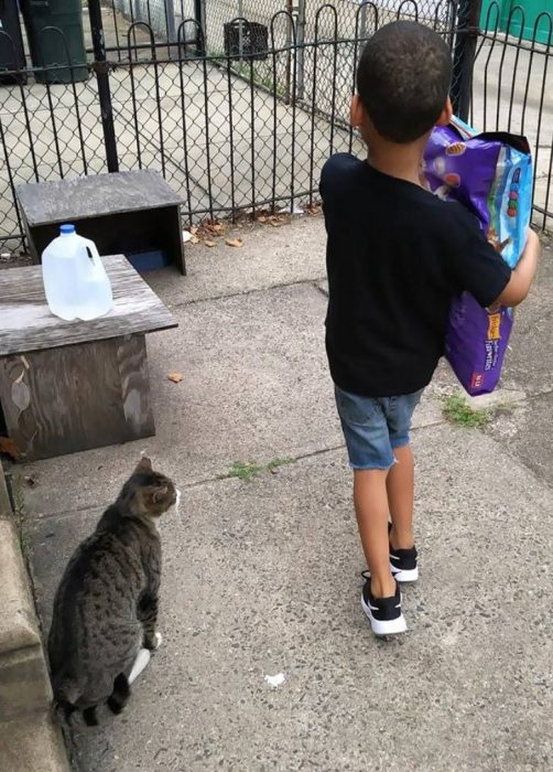 Niño cuidador de gatos