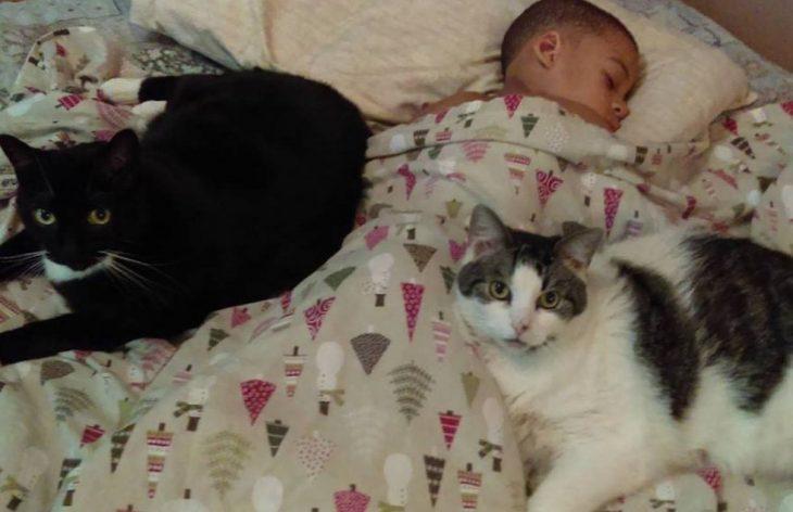 Niño con gatos
