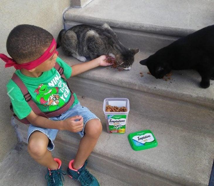 Niño cuidando gatos