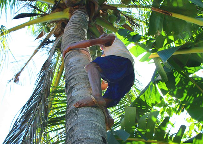 hombre subiendo palmera