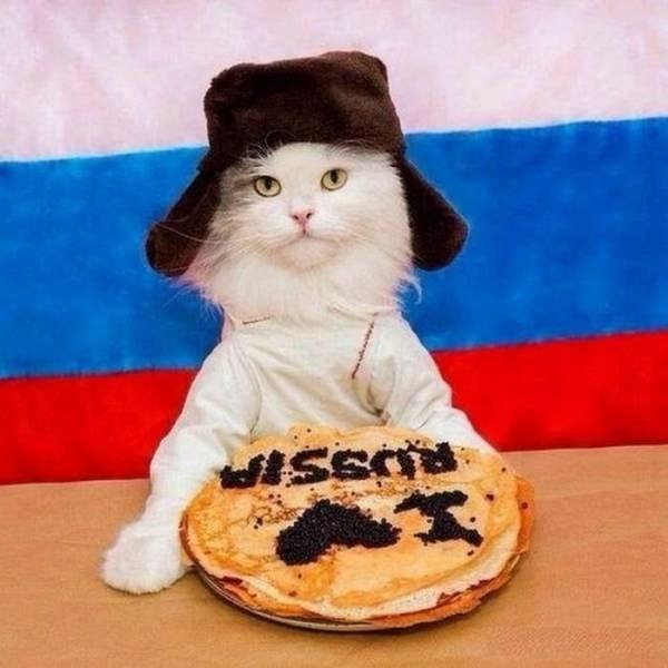 Gato en Rusia