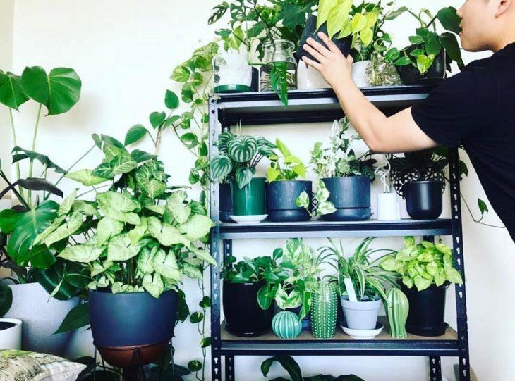 millennials y plantas