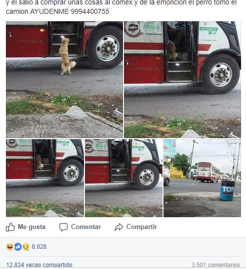perro en autobus
