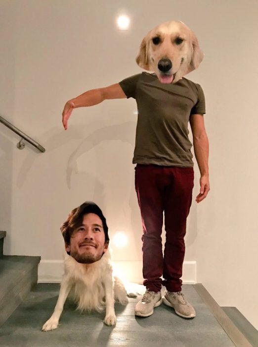 guerra de photoshop perro