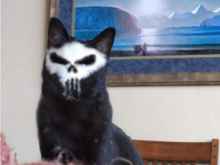 Gato punisher