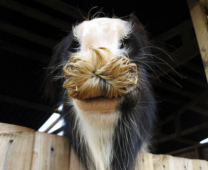 Caballos con bigote